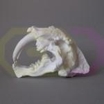 wydruk 3D - czaszka tygrysa szablozębnego