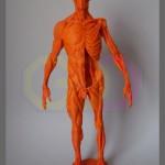 wydruk 3D - model anatomiczny