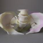 wydruk 3D - model miednicy